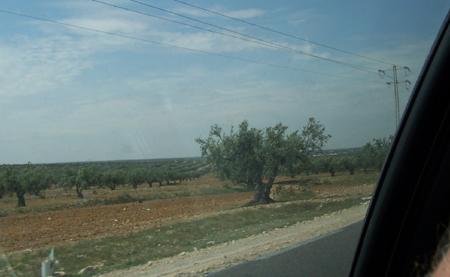 tunisia_010.jpg