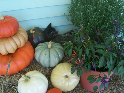 pumpkins-and-mo-kitty.jpg