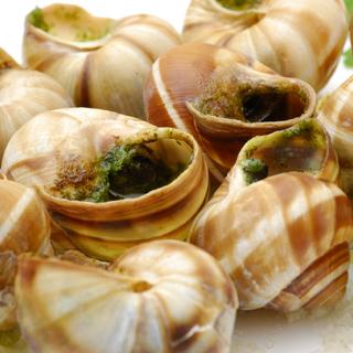 snail3
