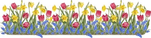 tulipborder